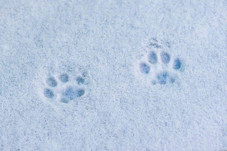 Cat-footprints