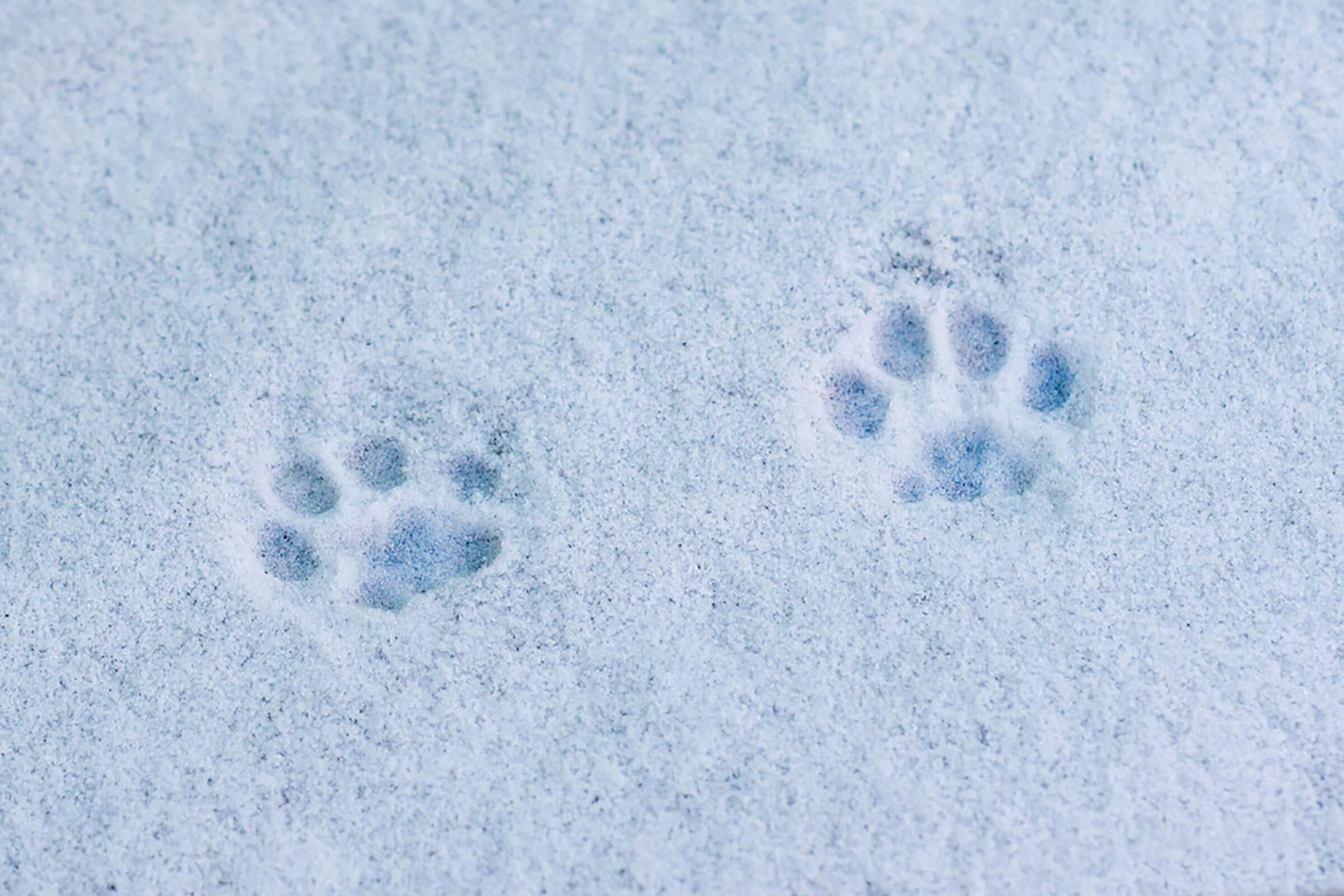 Cat-footprints