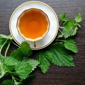 8 Surprising Health Benefits of Nettle Tea