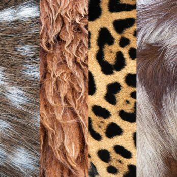 Can You Guess These Animals Based on Close-Ups of Their Fur?