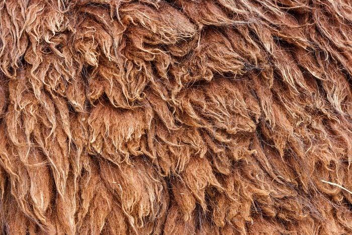 Llamas-fur