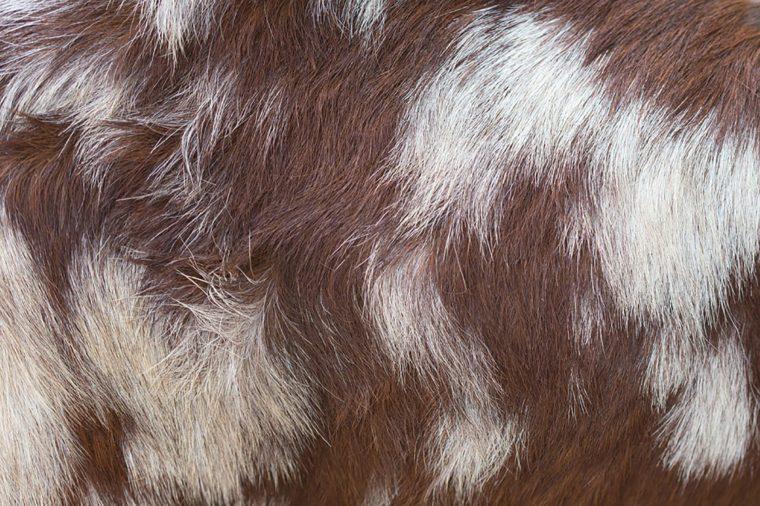 Goat-fur