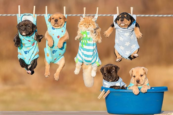Five cute puppies and a kitten are pinned to a clothesline by their pajamas