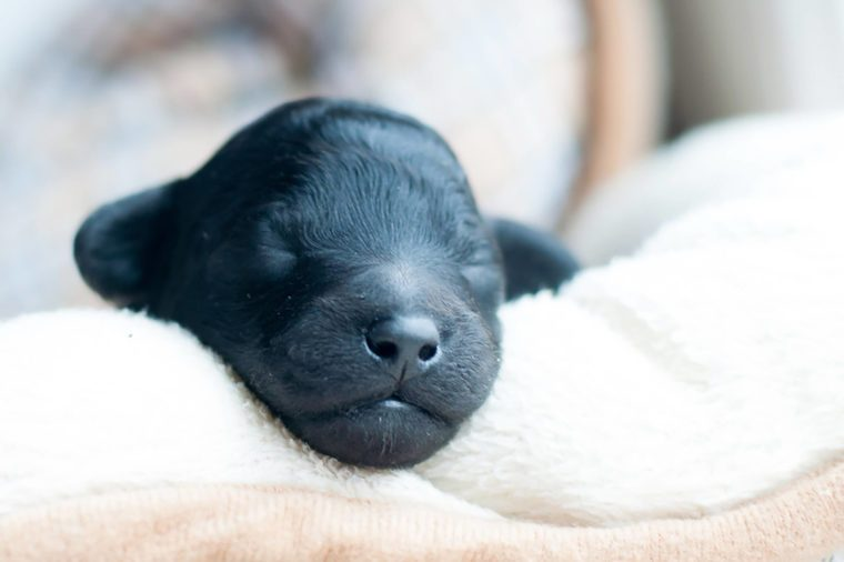 How To Potty Train A Puppy Reader 39 S Digest