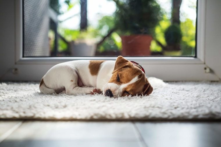 how to potty train a dog Dog lovers training course if your dog has become too noisy or disobedient or aggressive, our dog lovers training course will teach you how to obedience train it and stop it from barking and biting.