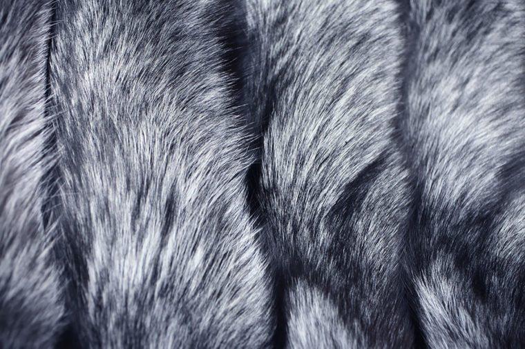 Silver-fox-fur