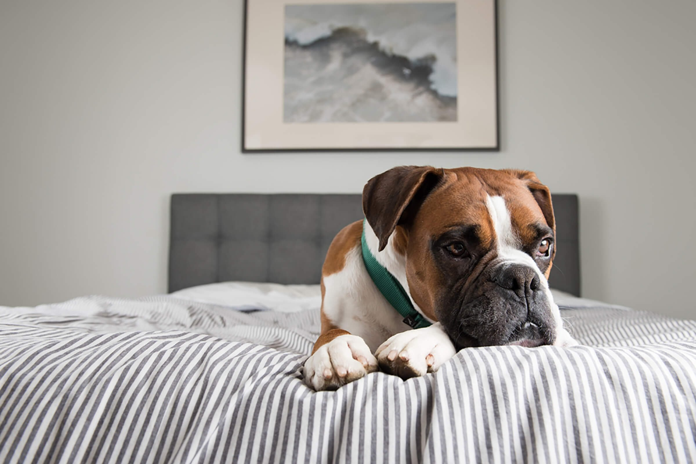 Warning Signs Your Dog Is in Pain | Reader's Digest