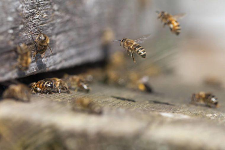 Bees at old hive entrance.