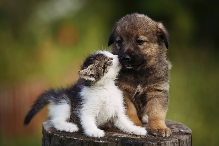 cute puppy and kitten touch noses