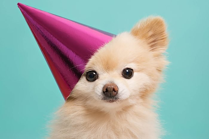adorable puppy wearing a pink birthday hat