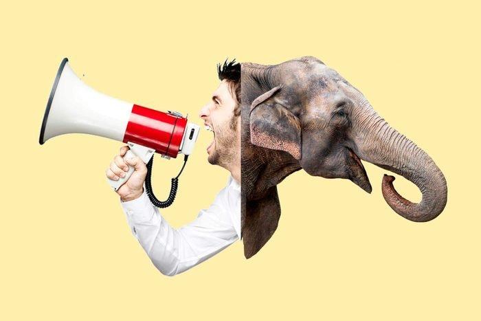 megaphone-elephant