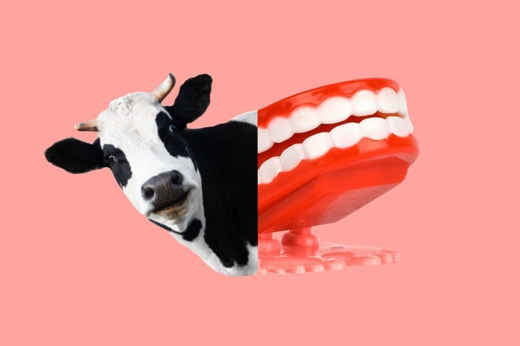 cow-dentures