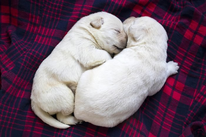 two adorable puppies snuggle on a blanket
