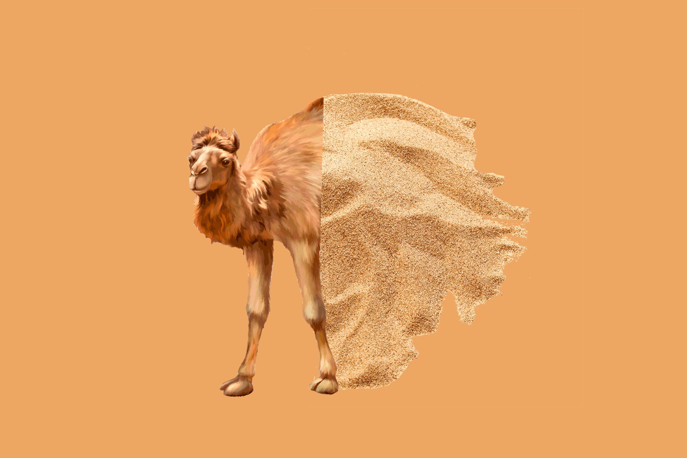 camel-sand