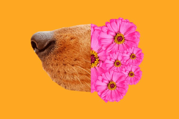 dog-flowers