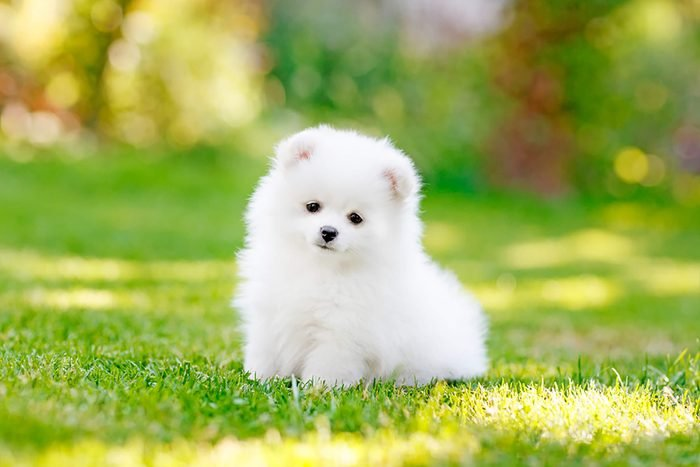 adorable fluffy puppy sits in the grass
