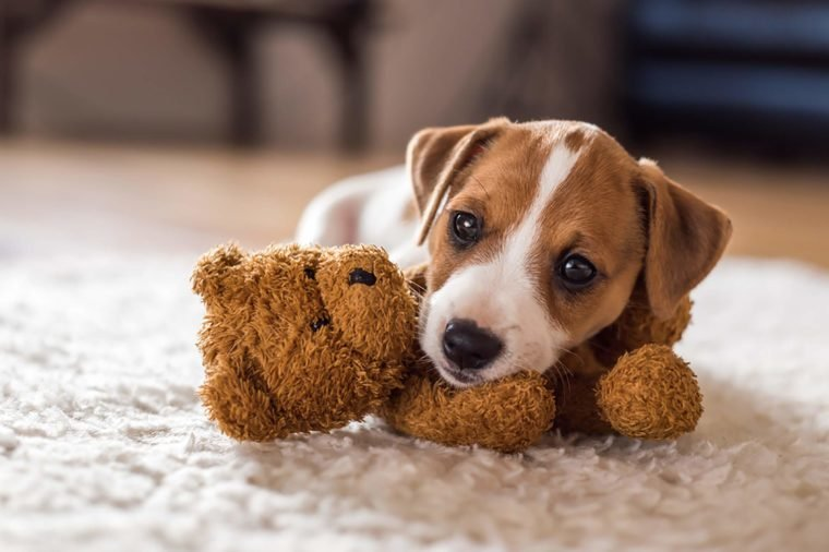 Adorable Puppy Pictures That Will Make You Melt Readers Digest