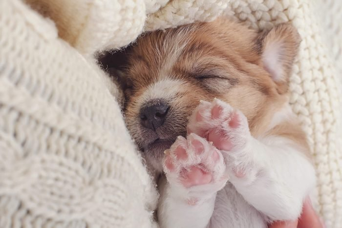 tiny puppy sleeps with his paws in the air