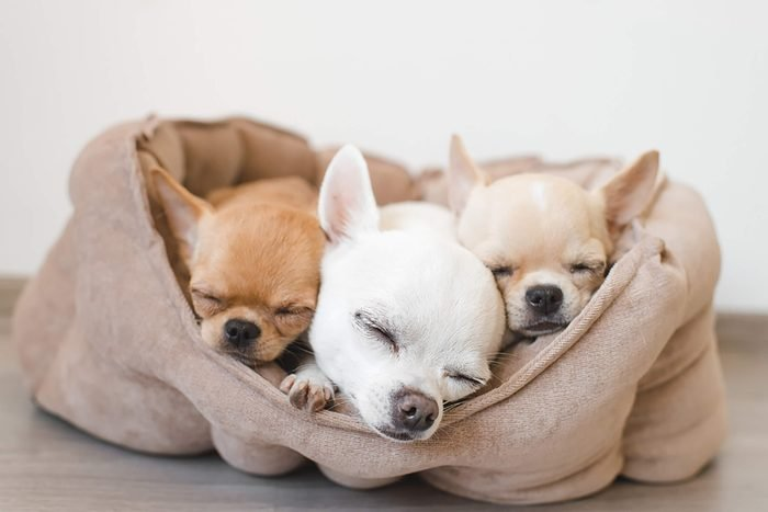 three cute puppies sharing one bed