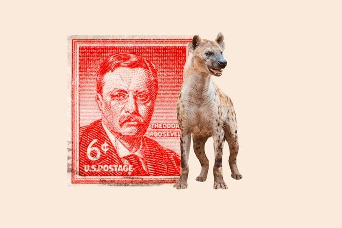 stamp-hyena