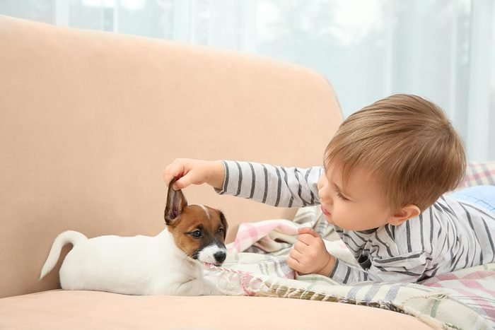 baby inspects the ear of an adorable puppy