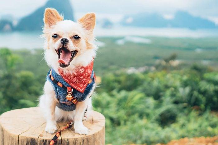 cute puppy wearing bandana