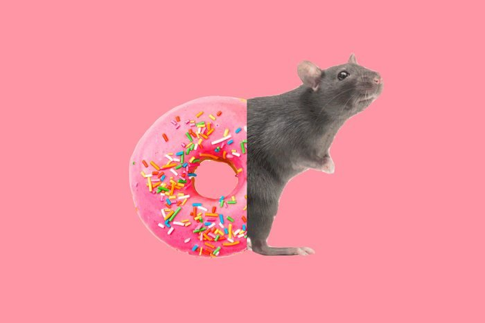 donut-rat