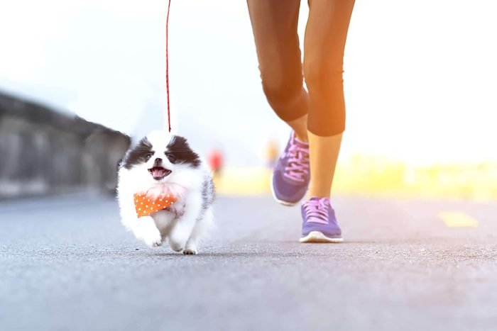 adorable puppy goes for a run with anonymous woman