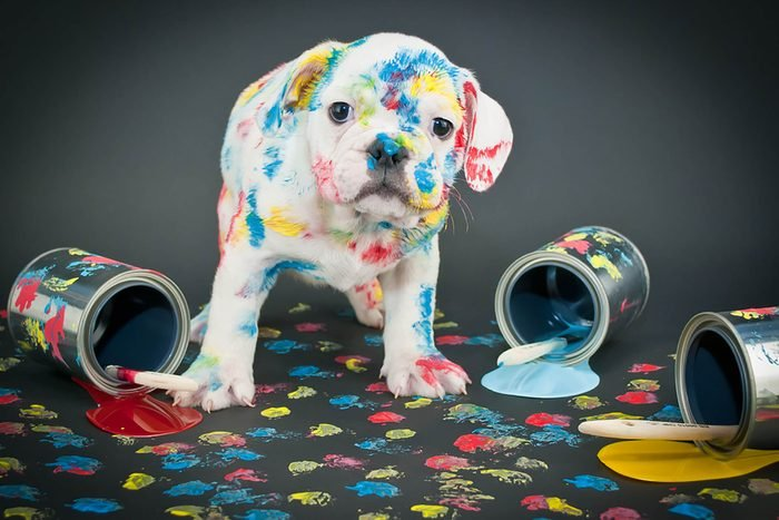 adorable puppy with colored paint on him