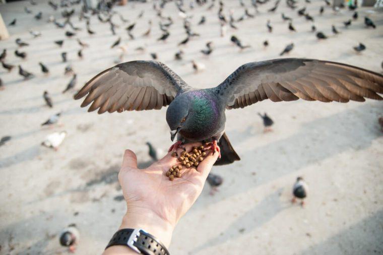 Yong man feed pigeons on Bangkok street