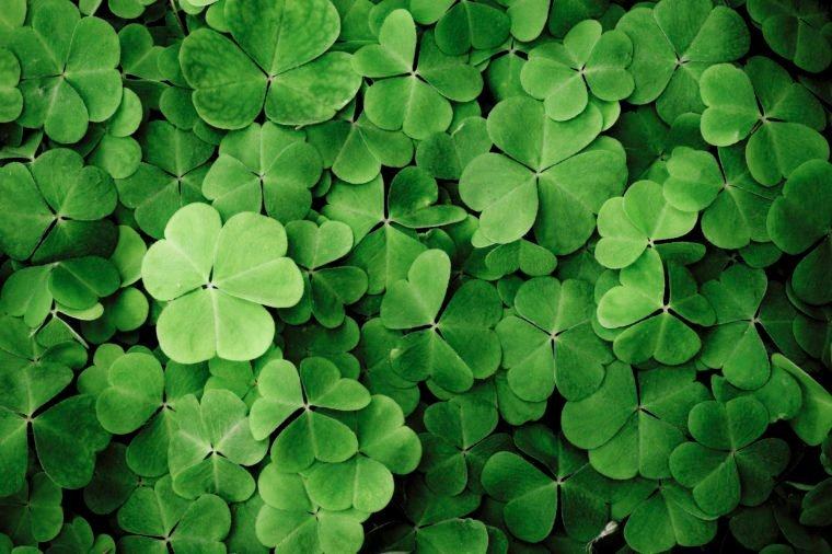 Clover. Texture. St Patrick's Day fun facts.