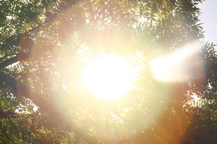 Sunshine. Sky. Bright sun in the sky. Sunlight circles. A solar circle, a bright solar flare, rays in green branches, rays in green trees. Sunset. Sun in the garden.