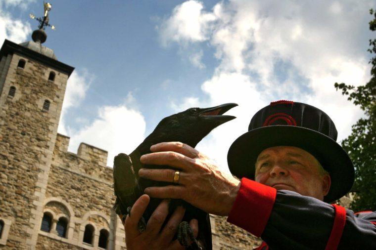 Derrick Coyle 'Raven Master'