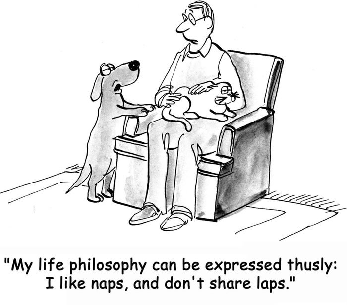 """Dog wants to take a nap and is jealous of cat on owner's lap, """"My life philosophy can be expressed thusly: I like naps, and don't share laps""""."""