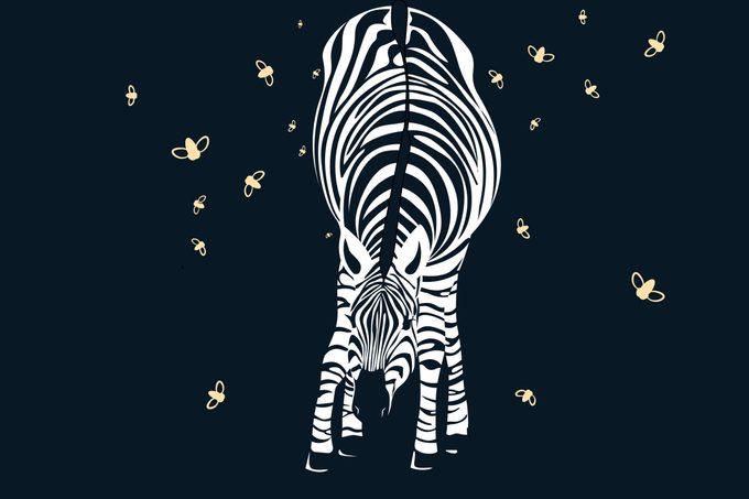 WK_NatGeo-Animals_US180373