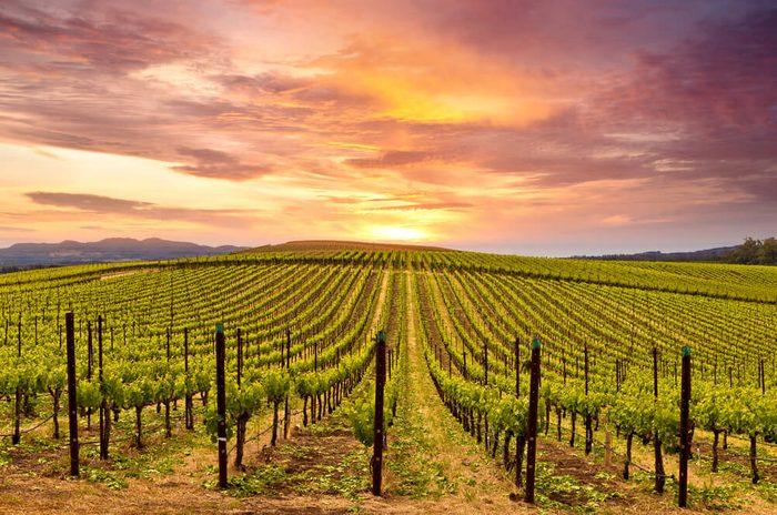 Napa Valley Vineyards Spring Sunrise