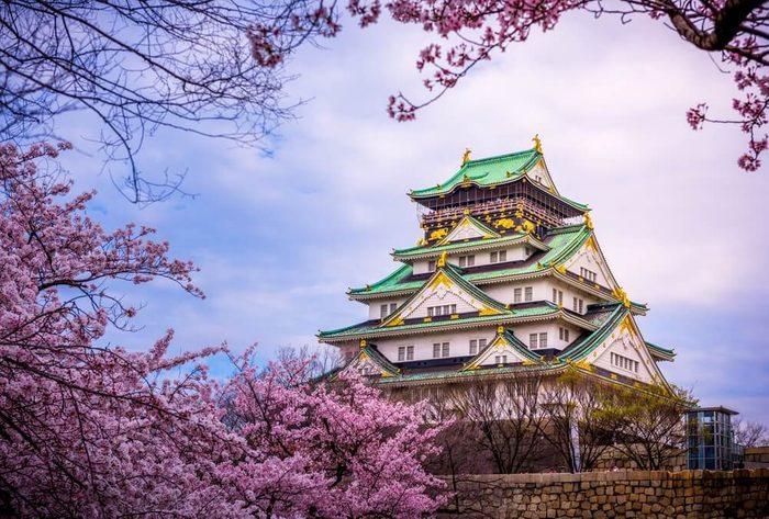 Osaka Castle Sakura