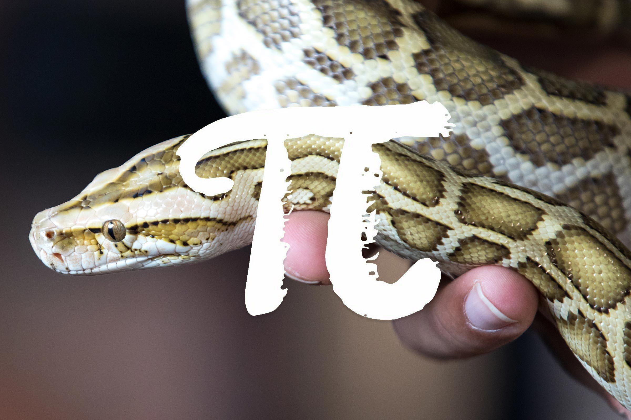 python pi laugh snake