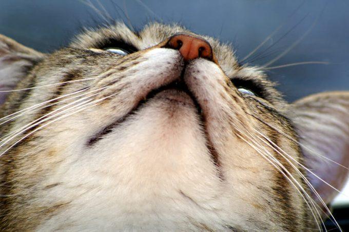Cat from beneath