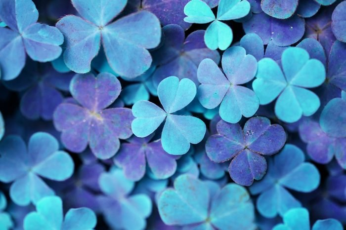soft blur Lucky clovers with rainbow