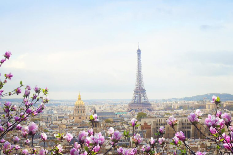 skyline of Paris city roofs with Eiffel Tower at spring day with tree bloom, France
