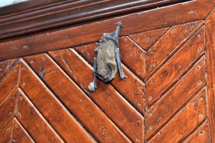 bat sit on the door