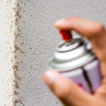 15 Things Your Exterminator Won't Tell You