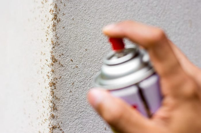 Many ants are walking on the wall. While the men's hands are using spray to eliminate.