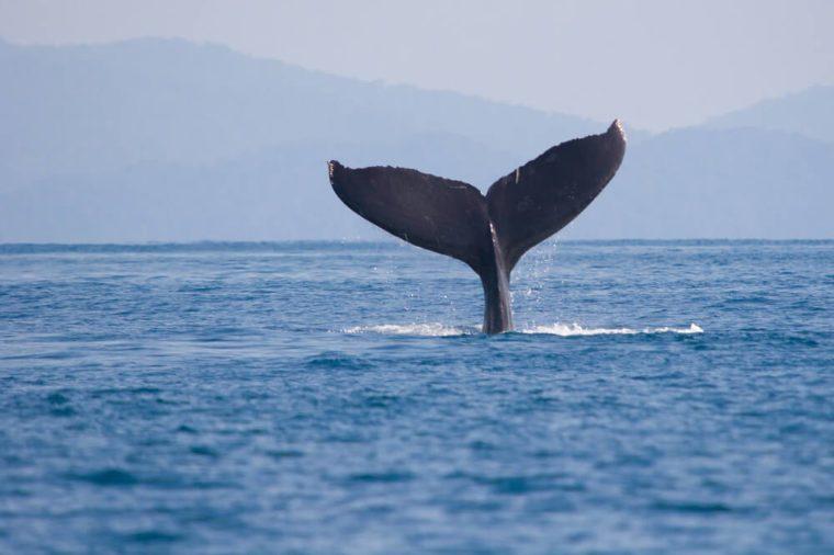 whale_weird time fac