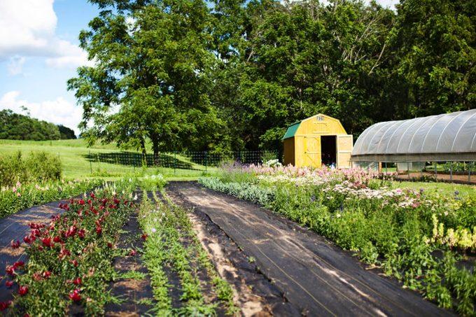 Morning Sun Flower Farm