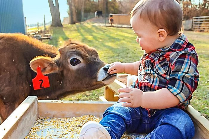 baby feed cow
