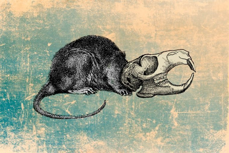 Bizarre Ancient Remedies You Won't Believe Existed