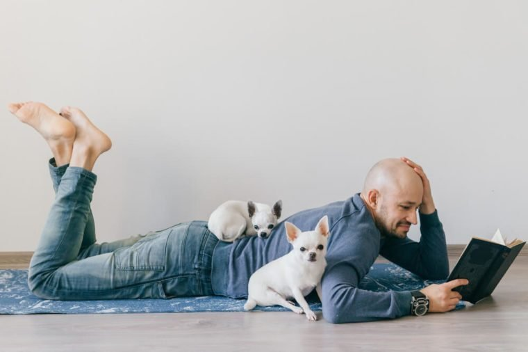 Adult bald man in fashionable clothing lying on yoga mat. Young guy reading book. Two white male chihuahua puppies at home. Pet sleeping with owner. Little lovely furry dog sitting on wooden floor