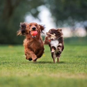 two small dogs playing together outdoors